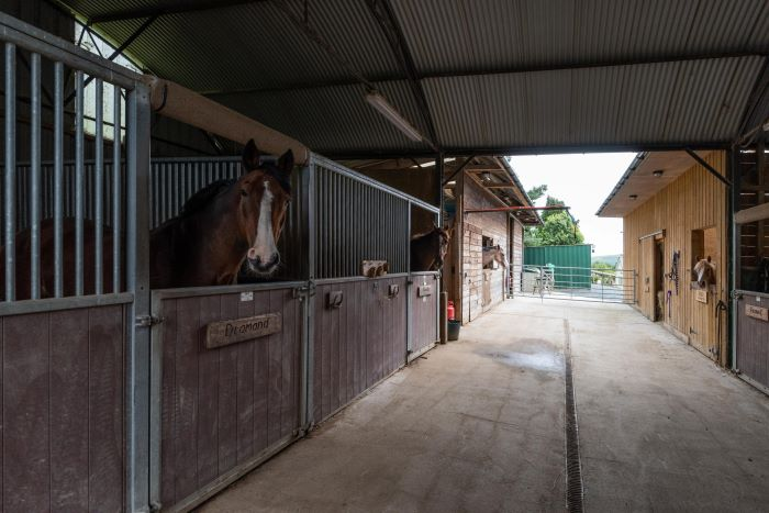 Forest Green Stables