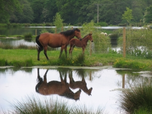 Equestrian properties – the choice is yours
