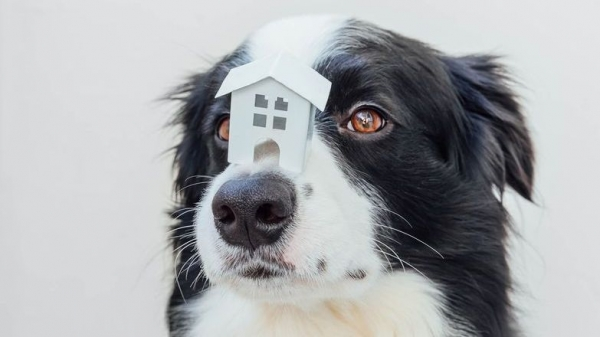 Demand for pet friendly rentals on the up